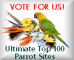 The Ultimate Top Parrot Sites